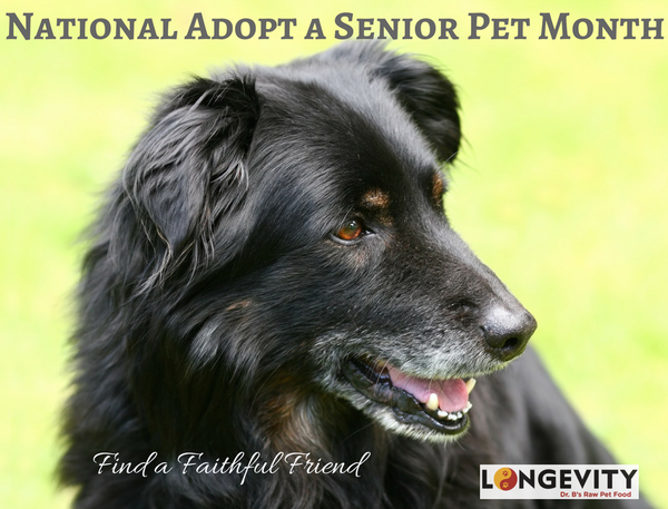 Benefits of Adopting a Senior Pet