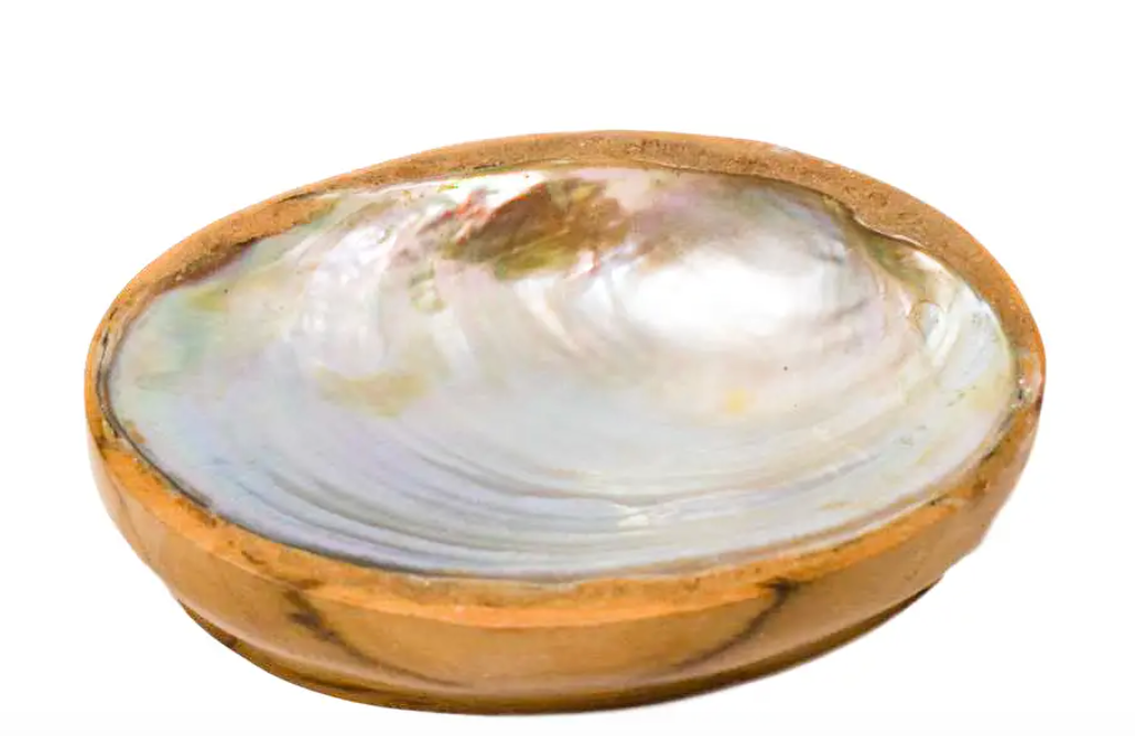 Teak and shell decorative dish