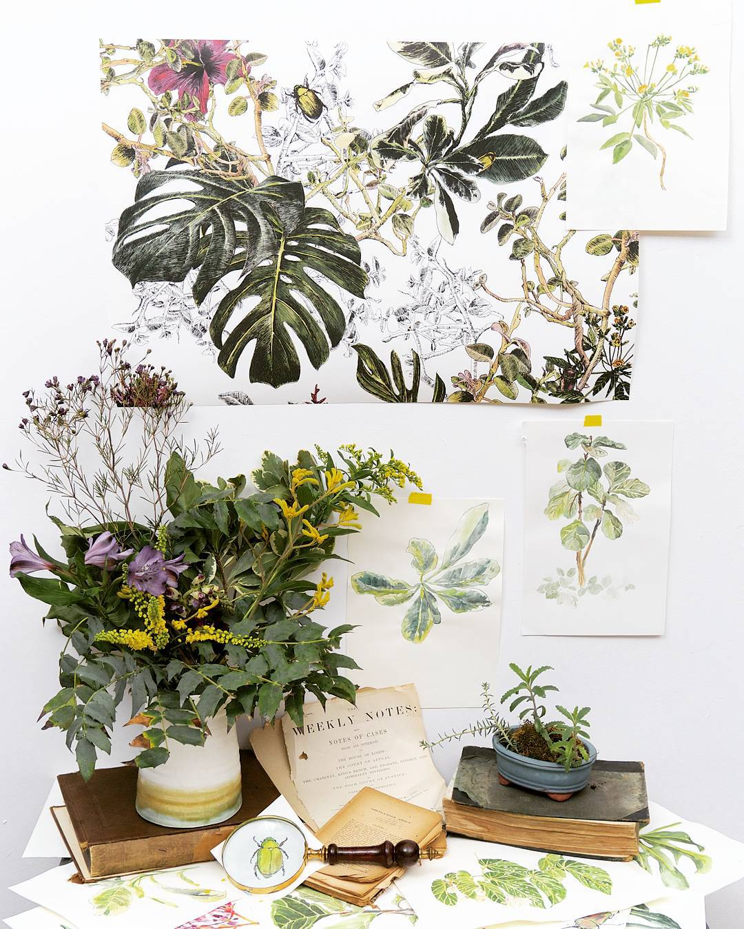 Sian Zeng's Wallflowers - The Planthunter Interview