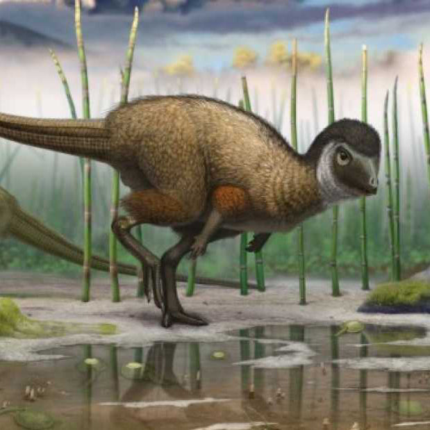 Did You Know That Dinosaurs May Have Had Feathers?