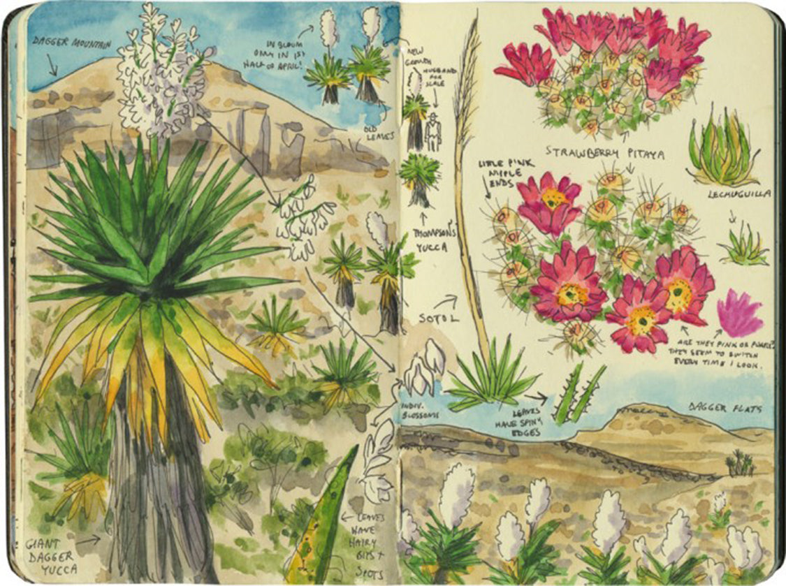 chandler_oleary_bigbend_cactus3-720x537