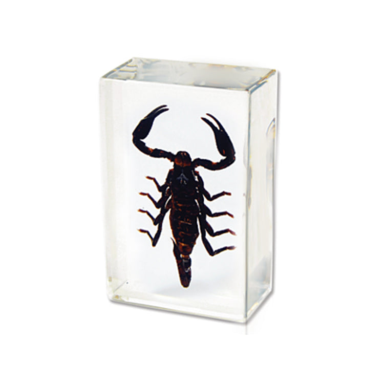 Black Scorpion Large Paperweight