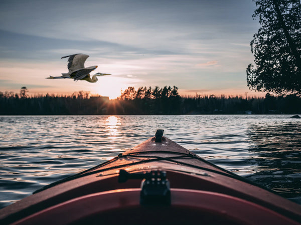Take a Walk on the Wild(life) Side...Birding in Your Kayak
