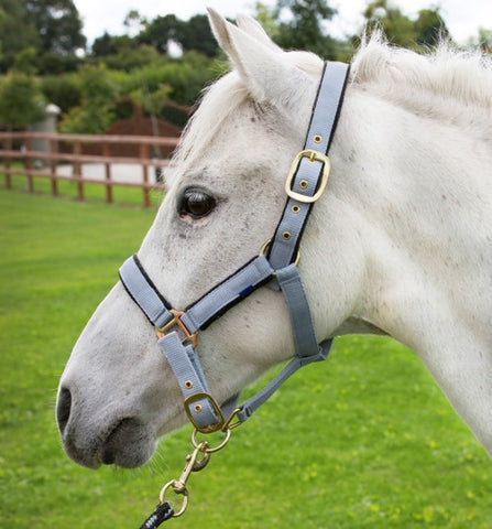 Cameo Fleece Lined Headcollar & Leadrope set