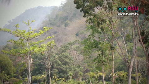replanting deforested hillsides