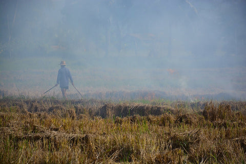 slash and burn of northern thailand forest