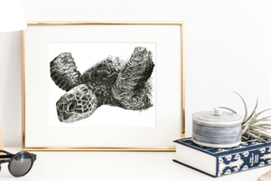 Sea Turtle Graphite Drawing Print