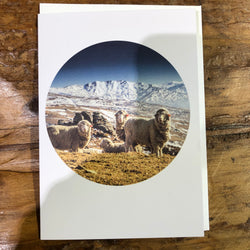 Merino Sheep Nevis Road - Landscape Greeting Card