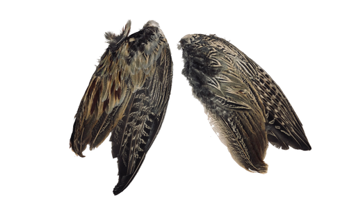 Pheasant Wings (2-Pack)