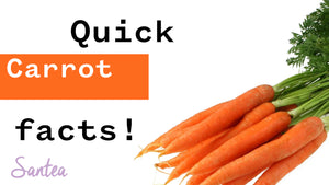 Carrot facts | 1 Minute Or Less