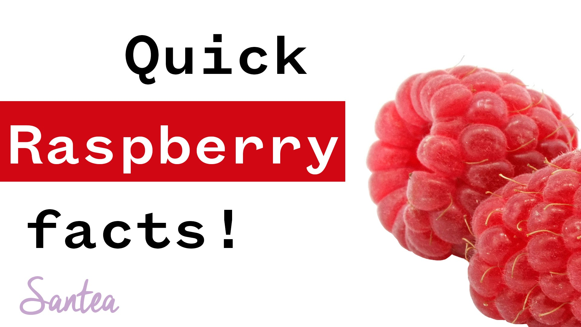 Raspberry Facts | 1 Minute or Less