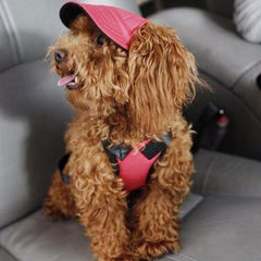 The Summer Canvas Pup Cap - Daily Kreative - Kreative products for beauty and healthy living
