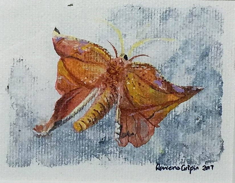 Orange Moth | Original Watercolour on Canvas 6 x 8 cm
