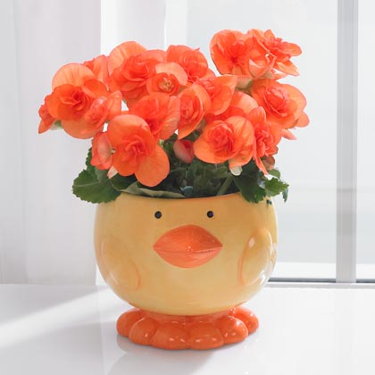 JKM Chick Face Planter