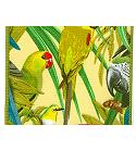 JKM Wire Edge Tropical Birds 2 Jacquard Print Ribbon
