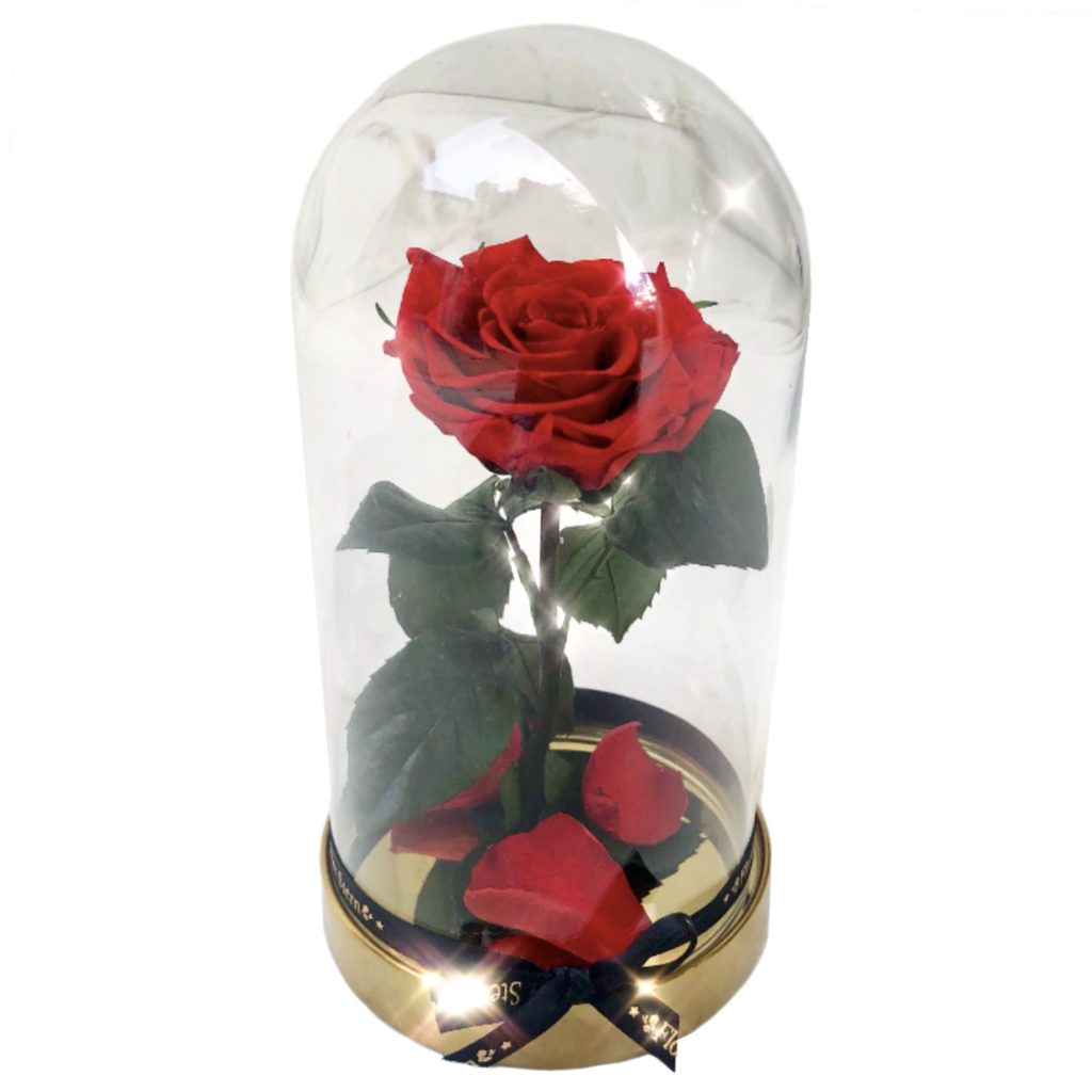 X Stern Enchanted Rose
