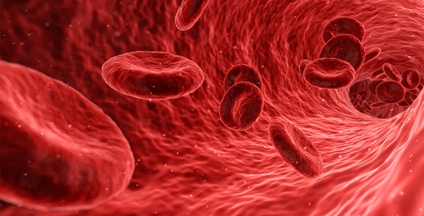 iron red blood cells