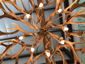 16 Light Mule Deer/ White Tail Mother In-Law Antler Chandelier (AWC-46) - Antlerworx