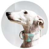 martingale galgo collar cheesecake