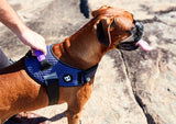 Zee.Dog Wicked FlyHarness peitoral