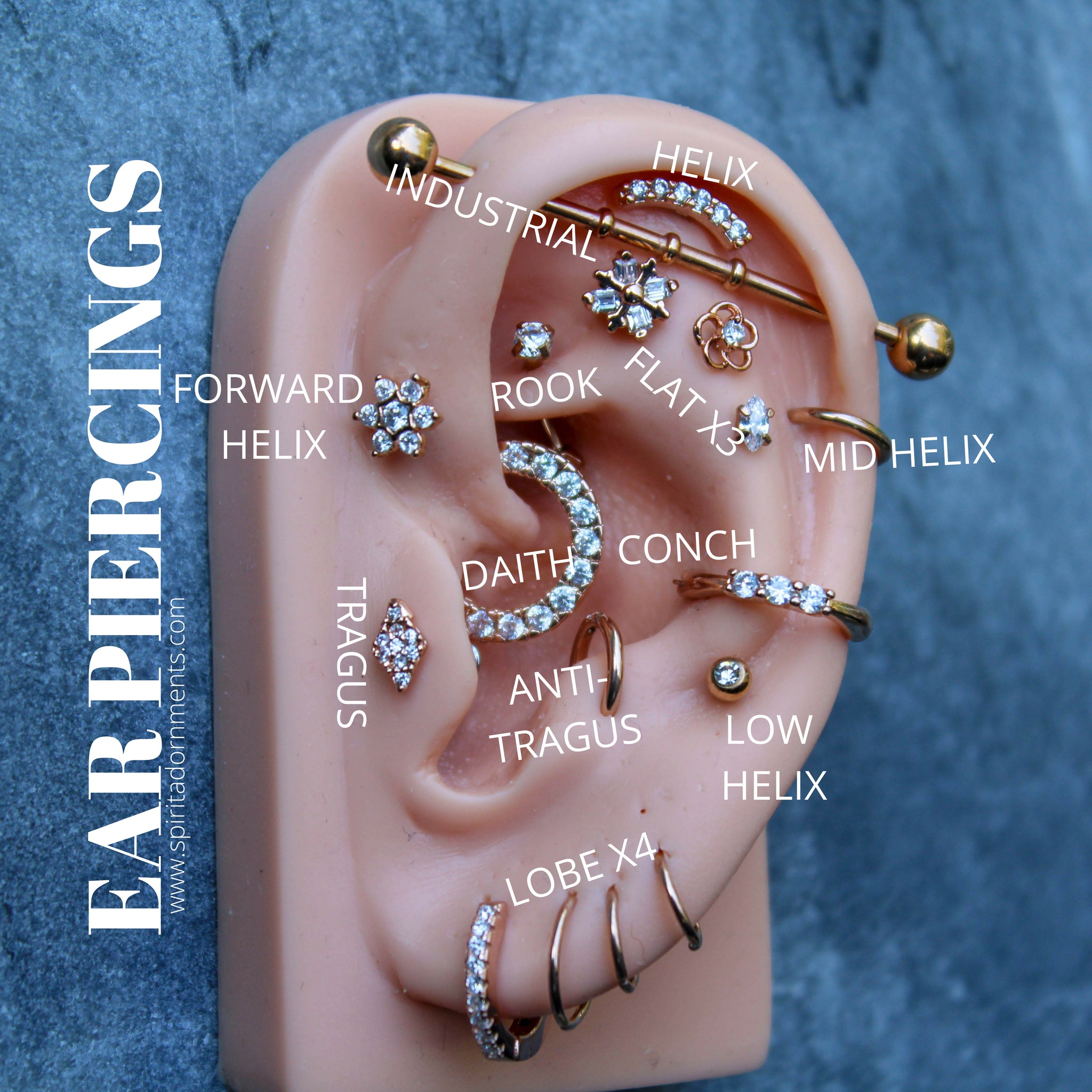 Ear Piercings Diagram in 21018