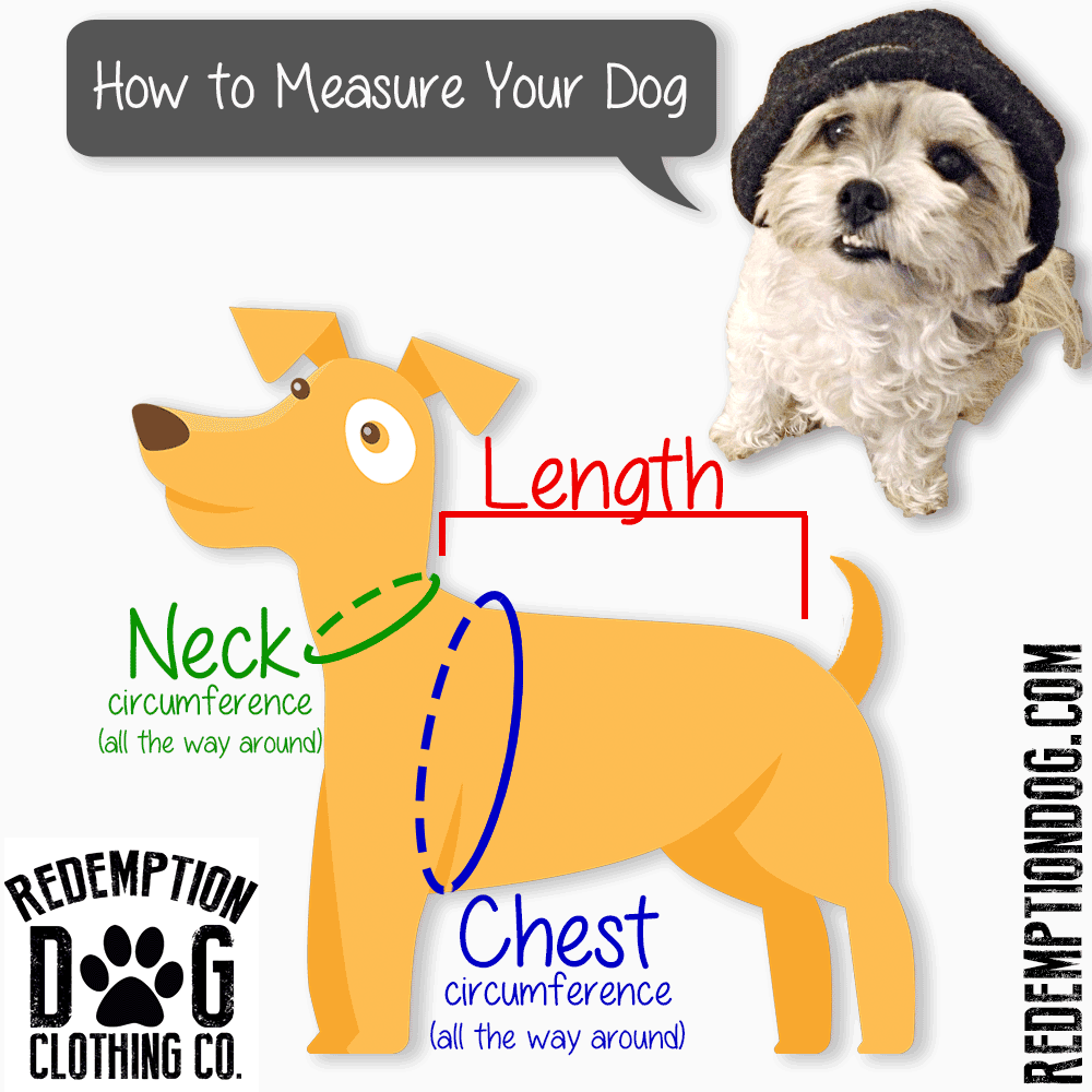 How To Measure Your Dog!