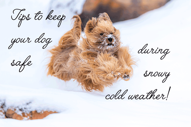 Keep Your Dogs Safe During Snowy Cold Weather