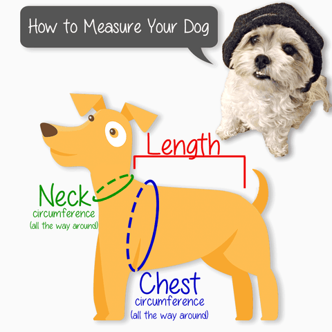 How to take your dog's measurements