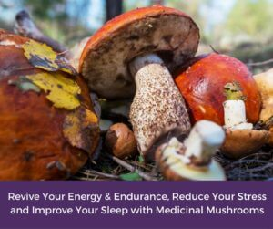 Revive Your Energy & Endurance, Reduce Your Stress and Improve Your Sleep with Medicinal Mushrooms