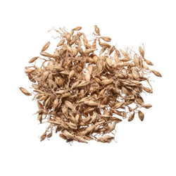 Mai Ya (Barley Sprouts) - Bulk Chinese Herbs for Acupuncture - Plum Dragon