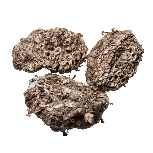 Lu Feng Fang (Hornet's Nest) - Chinese Herb for pain relief - Plum Dragon Herbs