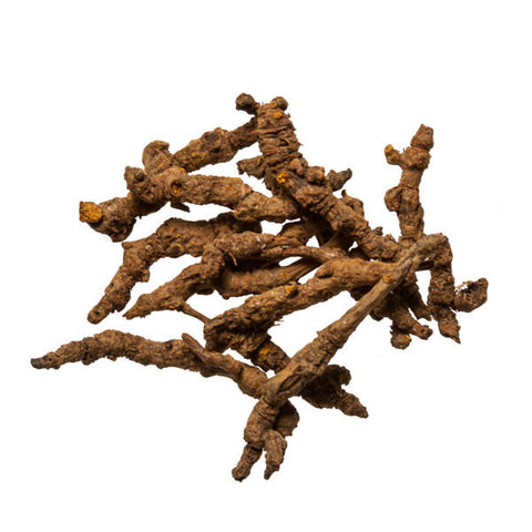 Huang Lian (Coptis Root) - Wholesale Chinese Herbs & Dit Da Jow