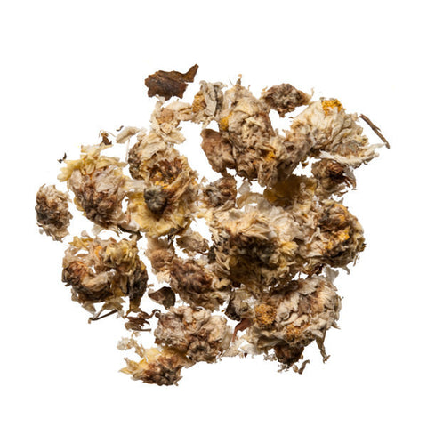 Ju Hua (Chrysanthemum Flower) - Chinese Herbal Tea - Plum Dragon Herbs