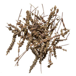 Jing Jie (Schizonepeta Bud) - Chinese herbal remedy for cold and flu