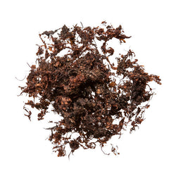 Hai Zao (Sargassum, Seaweed) - Bulk Chinese Herb Supplier for Acupuncture
