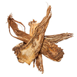 Dang Gui, Pian (Angelica Root, Angelica Sinensis) - Chinese Herbs for TCM