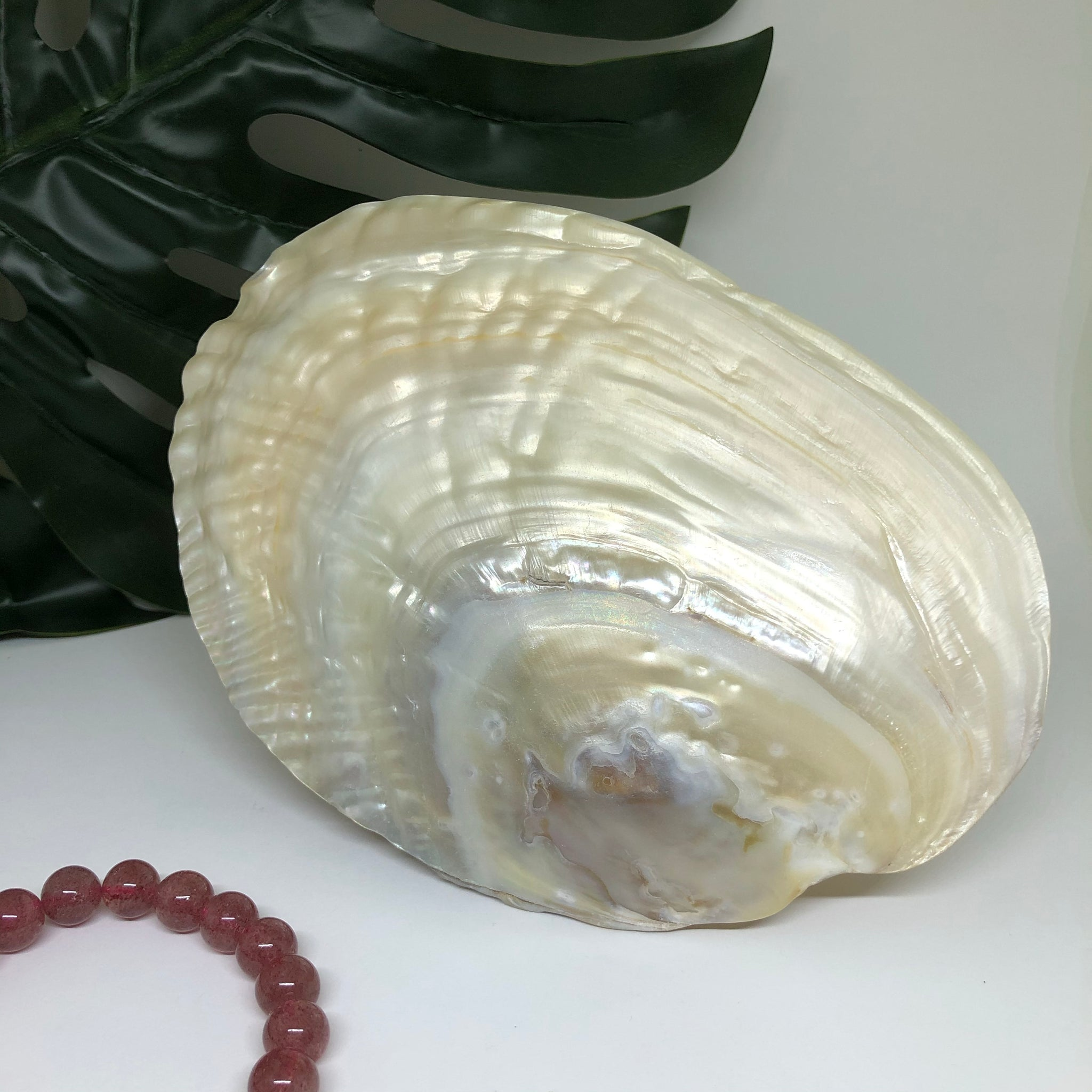 Pearl Shell 101