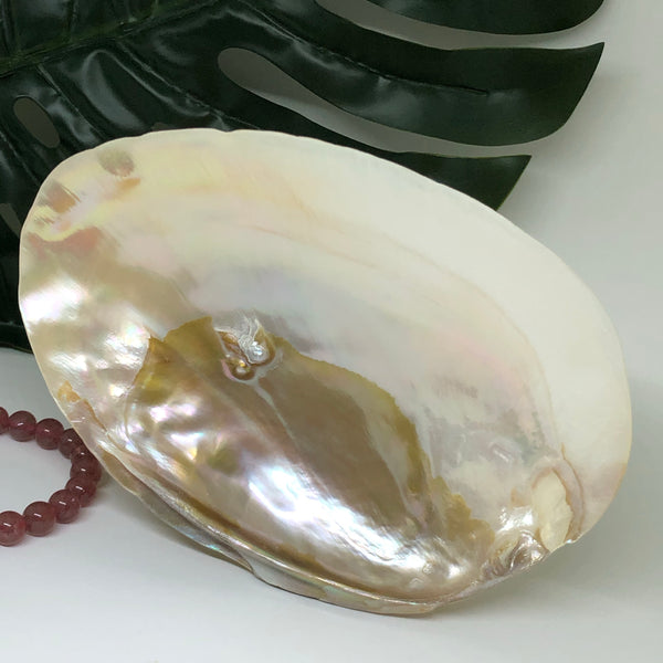Pearl Shell 103