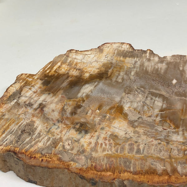 Petrified Wood Slice PWS01
