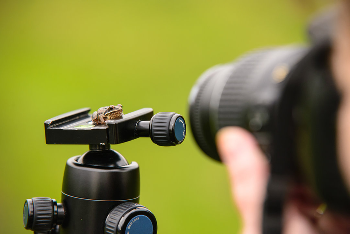 5 Tips for Handling Macro Photography