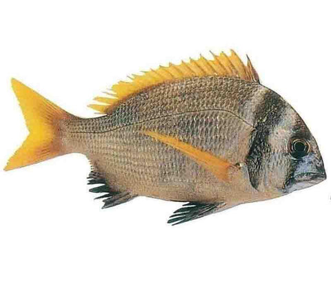 ARABIAN FISH