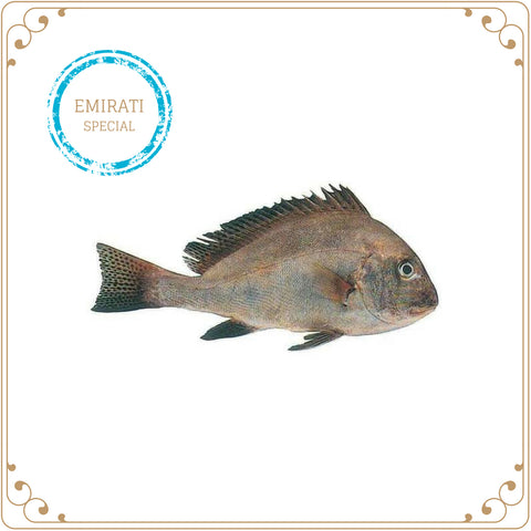 Painted Sweetlips | Farsh (Emirati Special) | Fishhub