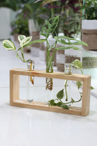 Test Tube Planters Triple