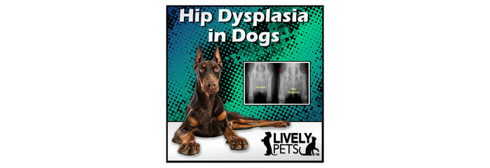 What is Canine Hip Dysplasia
