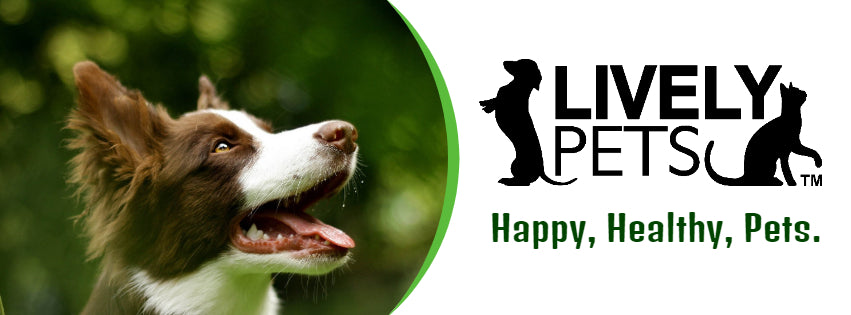 Lively Pets Pet health blog