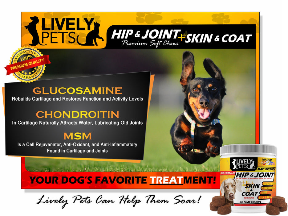 Best Hip & Joint + Skin & Coat Max Strength Glucosamine MSM Chondroitin Soft Chews for Dogs Mobility Flexibility Wellness
