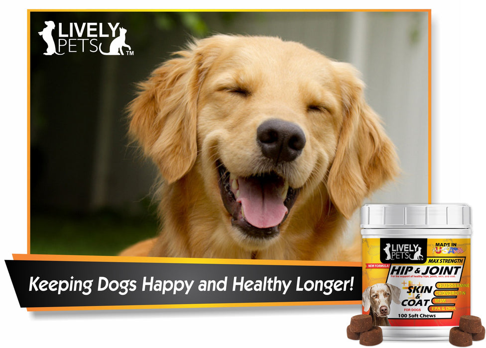 Best Hip & Joint + Skin & Coat Max Strength Glucosamine Soft Chewies for Dogs for a longer healthier life