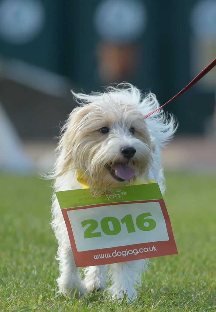 Dog Jog - Various locations through out September and October