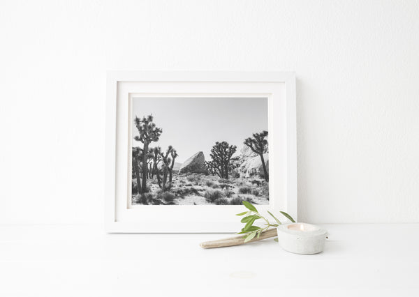 black and white joshua tree photo