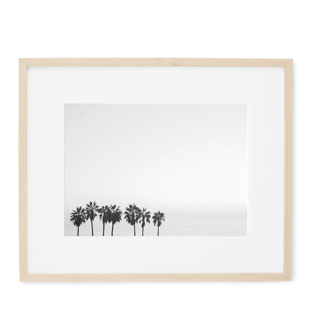 palm trees and the sea in black and white